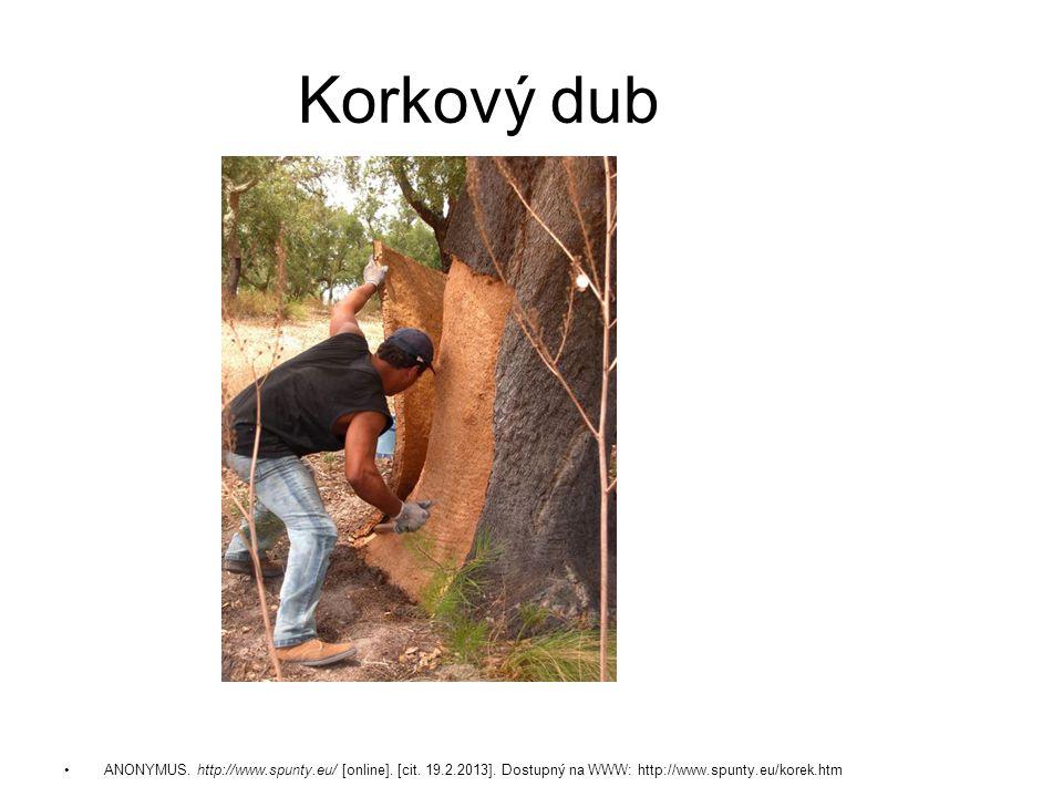 Korkový dub ANONYMUS. http://www.spunty.eu/ [online].